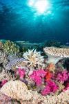 Fiji Reefscape