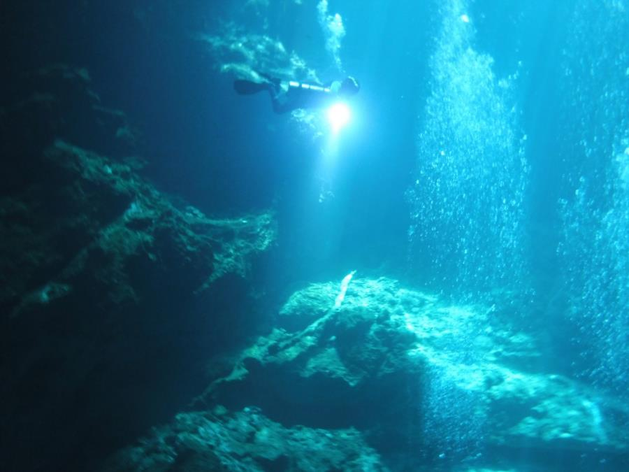 """From """"The Pit"""" Cenote in the Tulum, MX area"""