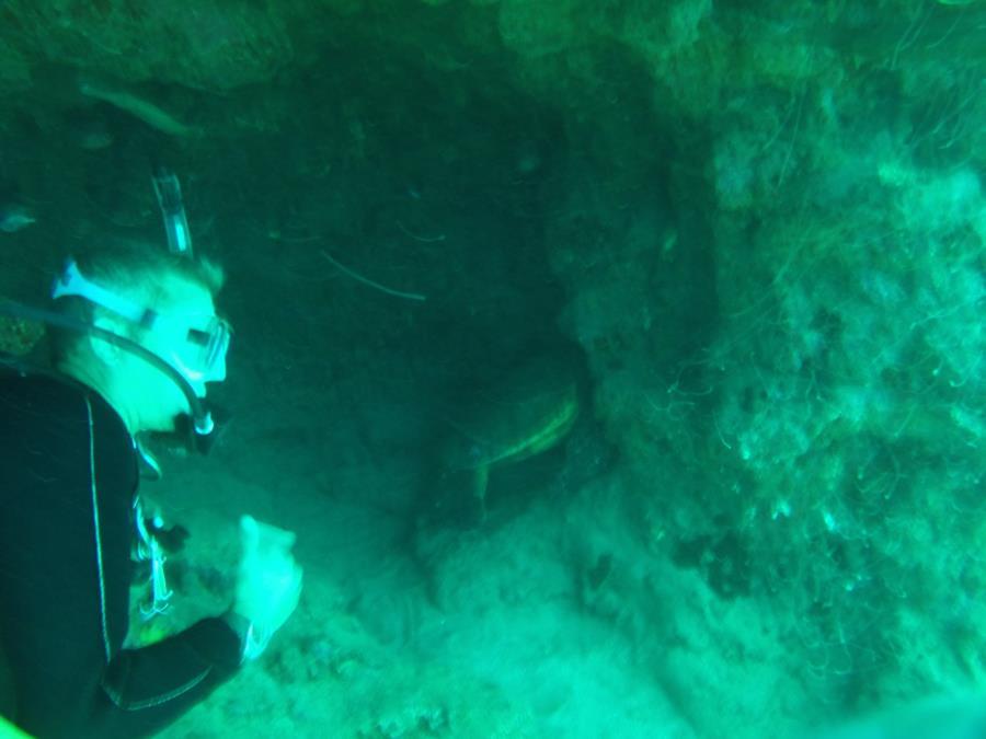 maui hawaii a sea turtle in a cave