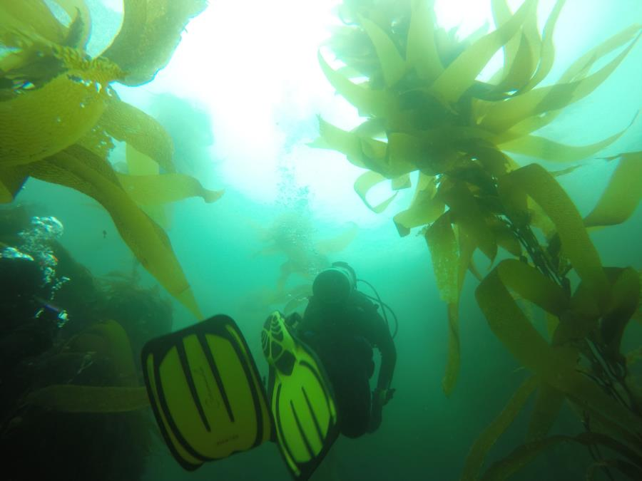 Channel Islands Kelp Forest