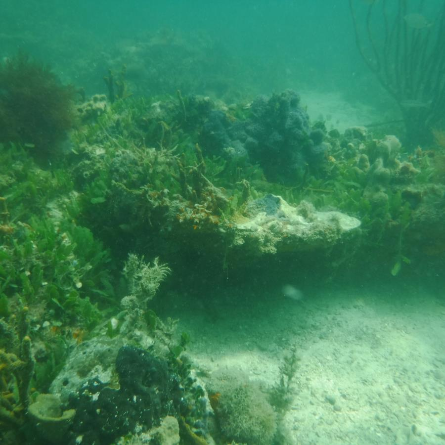Cool Shallow Reef
