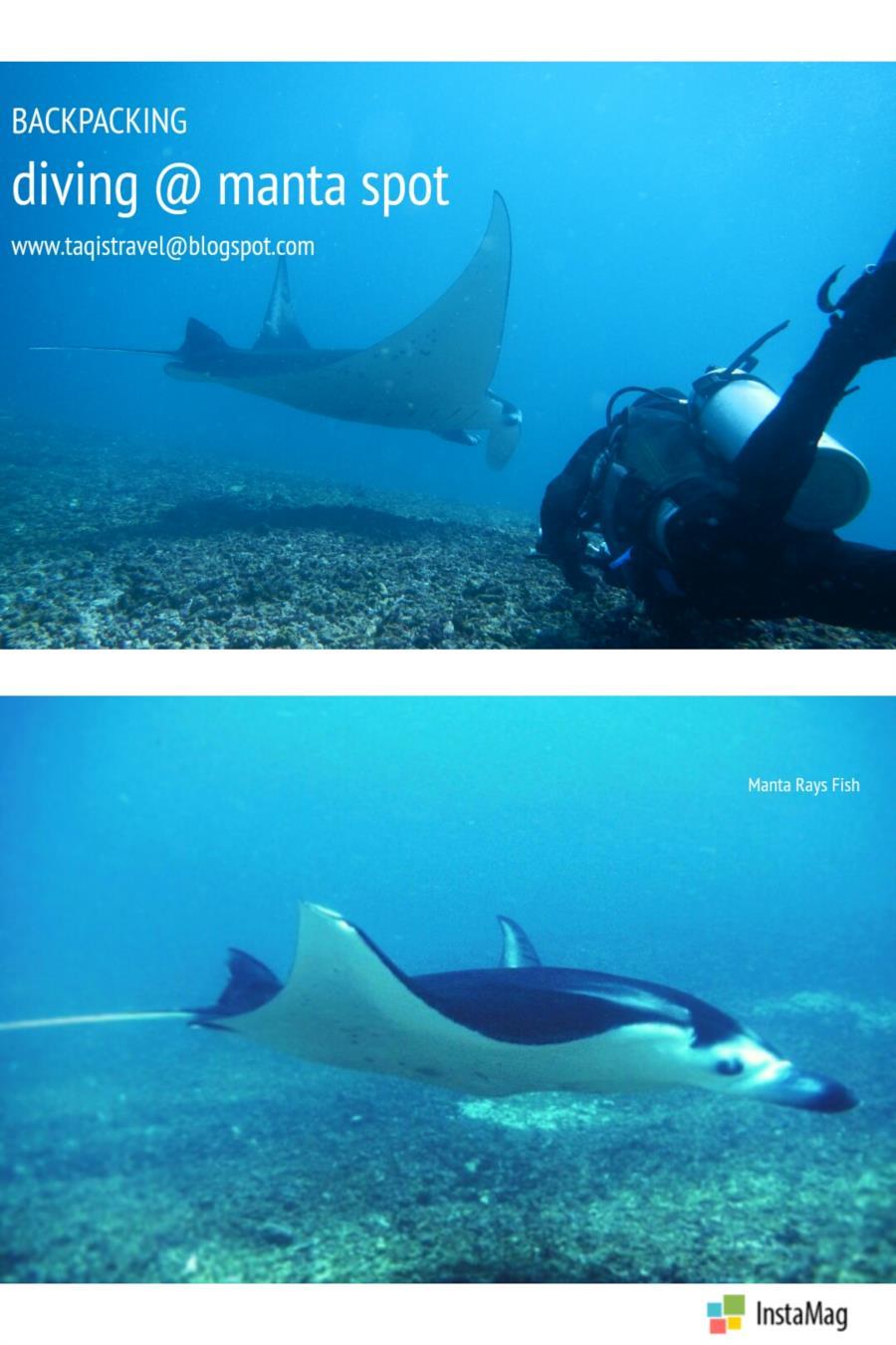 Diving in manta spot labuan bajo