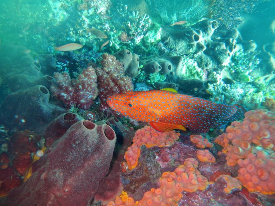 Colourful fish seeking for food