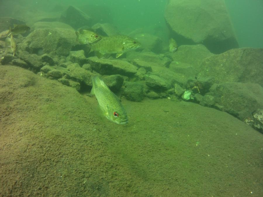 Big Fish1