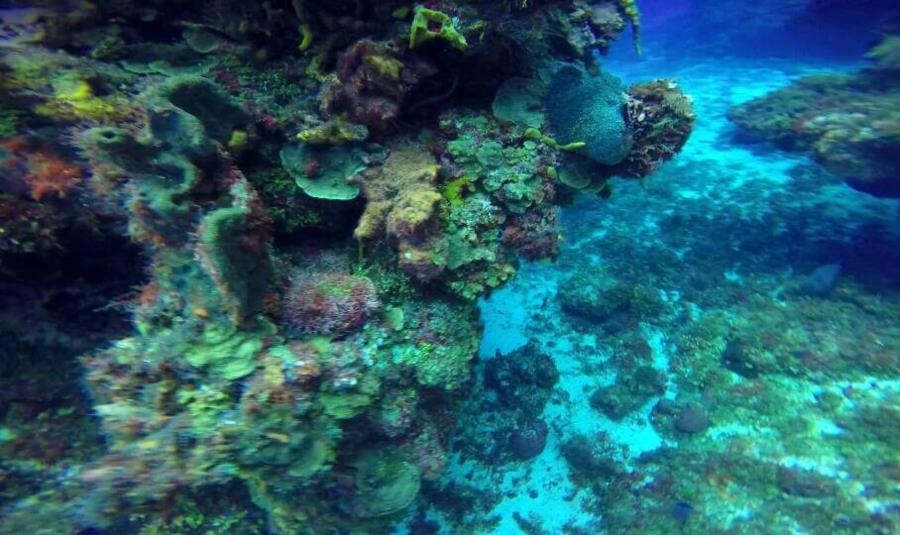 Reef, Cozumel, México, 8/2015