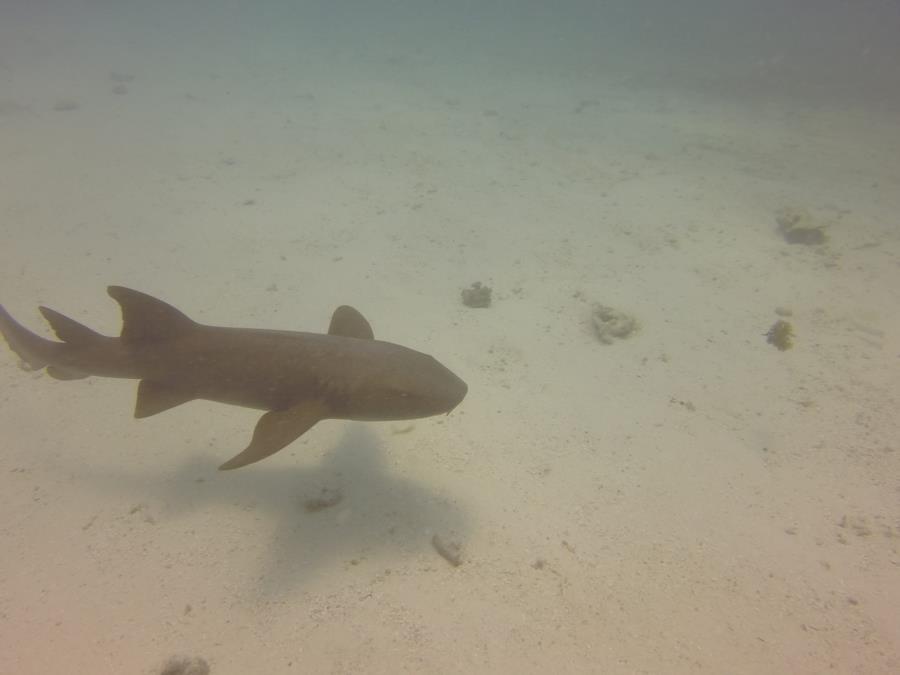 Belize Diving