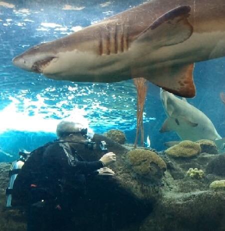 Shark Dive Florida Aquarium Tampa FL