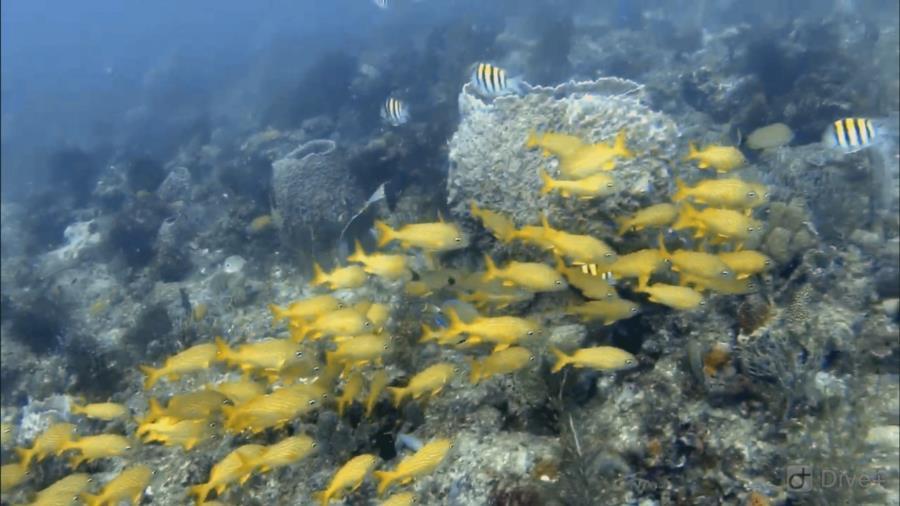West Palm Beach, FL Flower Garden Reef