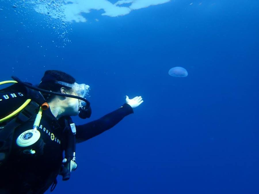 Red Sea Jelly Fish