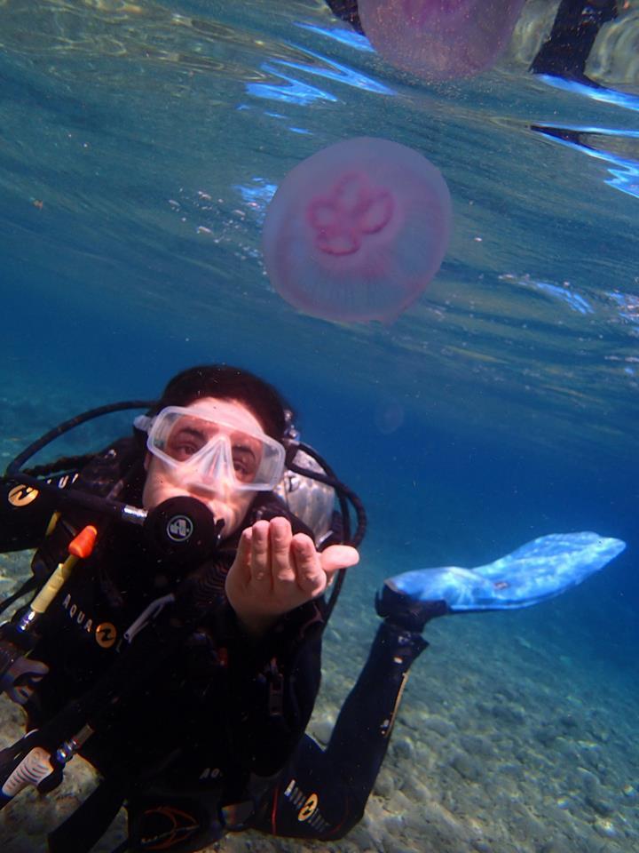 Red Sea Jellyfish
