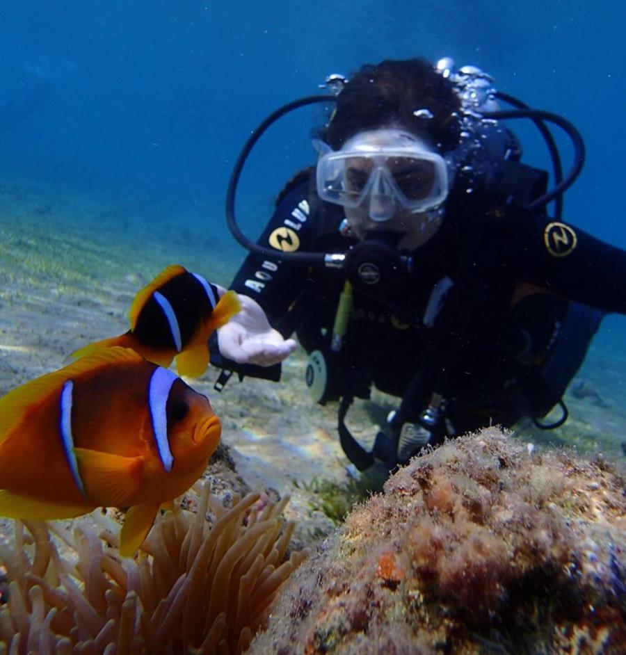 Clownfish in Dahab (Egypt)