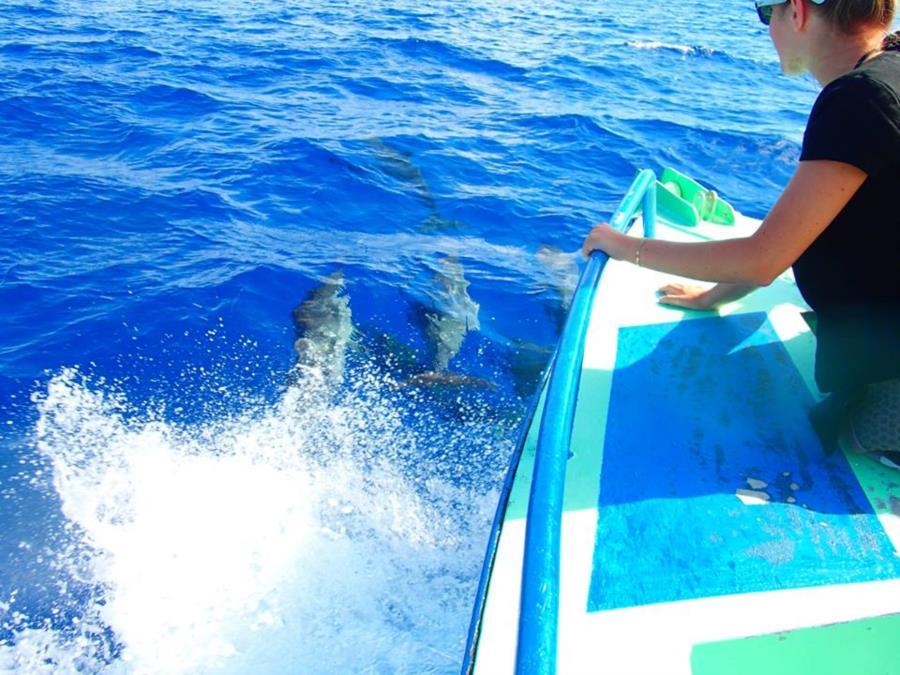 Dolphins - Bora Bora