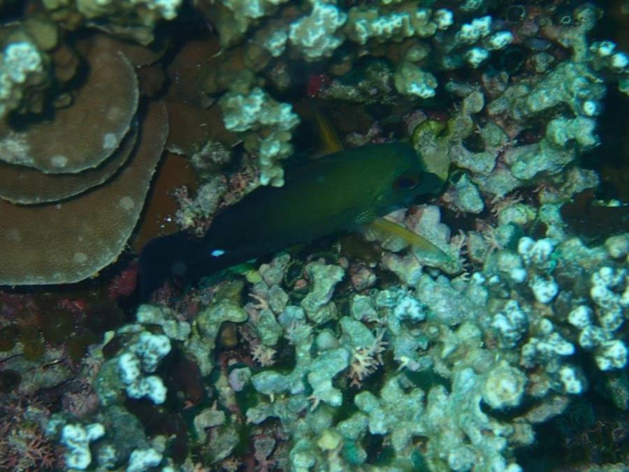 Bora Bora (Society Islands) - French Polynesia