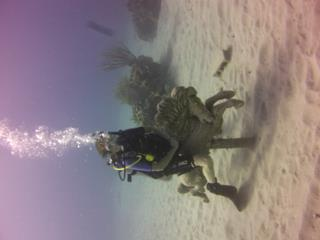 A real sea horse ride