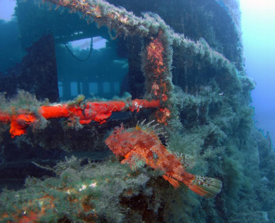 Wreck Karwela with scorpion fisch