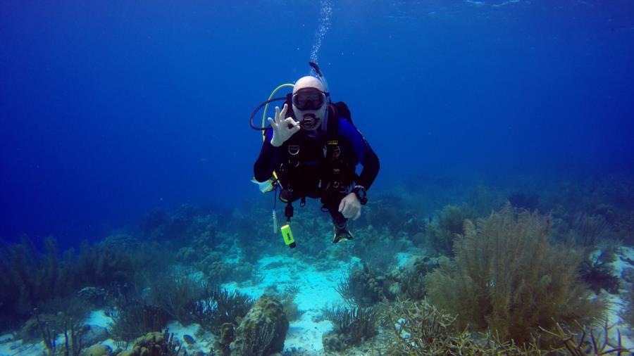 Dive # 50