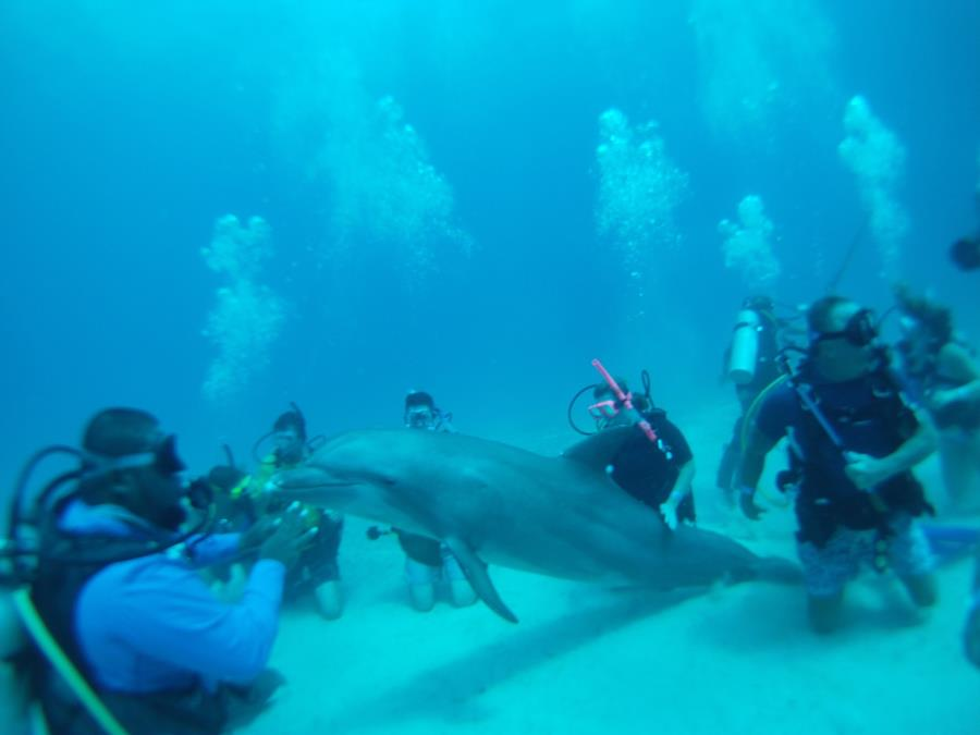 More dolphin photos