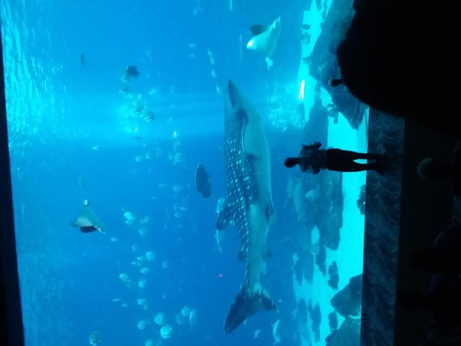 Georgia aquarium dive