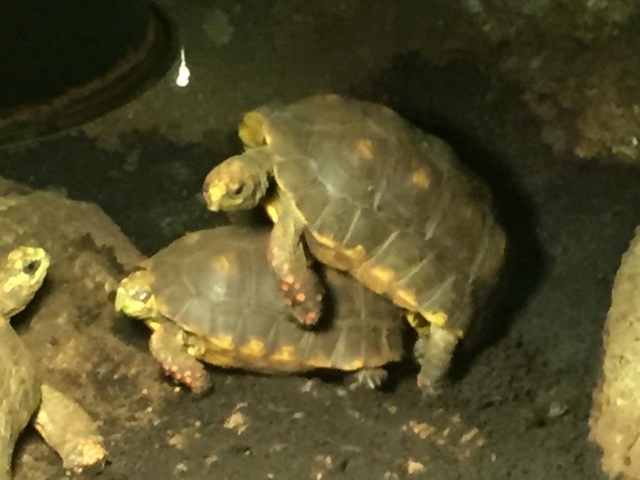 Turtles Boinking! Woot!