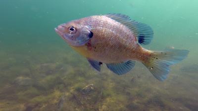 I named this fish Lady Gaga