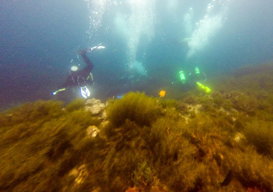 Catalina- Isthmus Reef