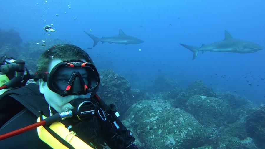 Galapagos Sharks Darwin Island