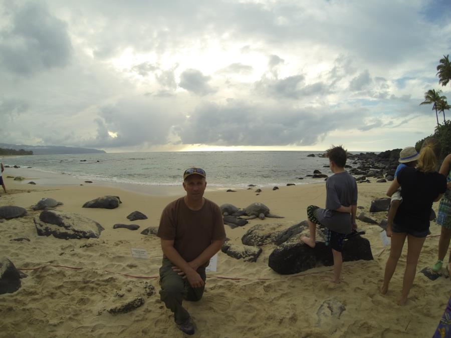 Sea Turtles on Beach