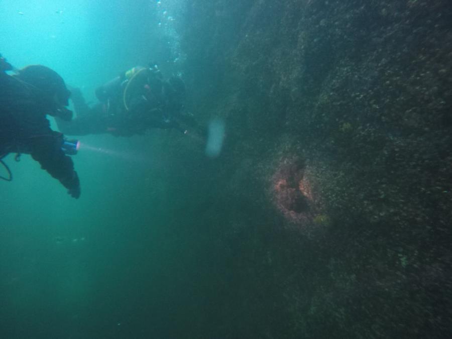 Looking at an Octopus in Seward, AK