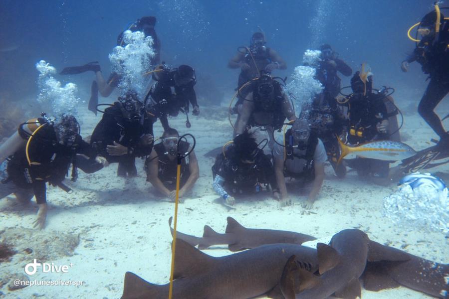 Sharks Belize 2019