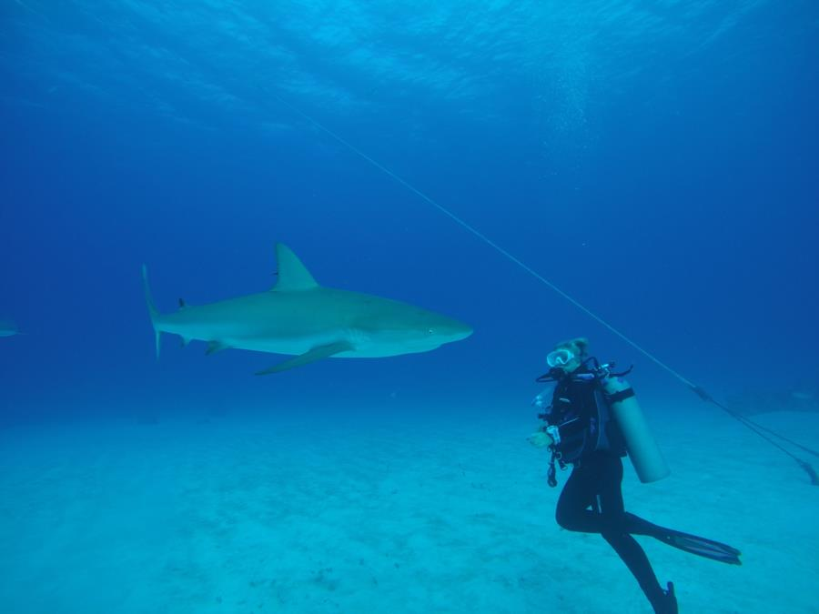Shark Up Close & Personal