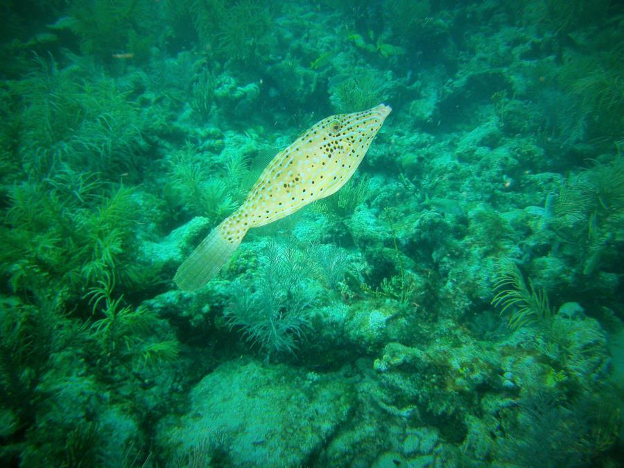 Davis Reef Key Largo