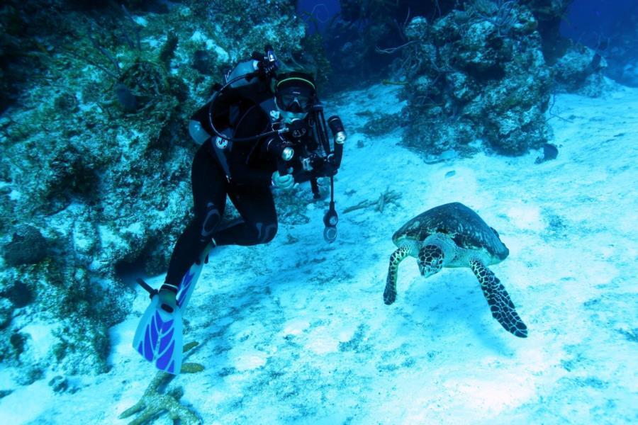 Nadia & Turtle