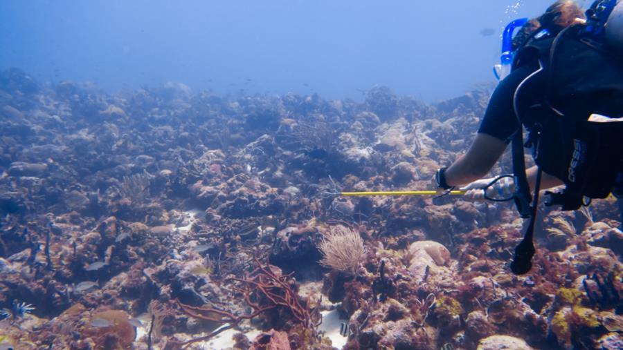 Beautiful reef at Shark Dorm
