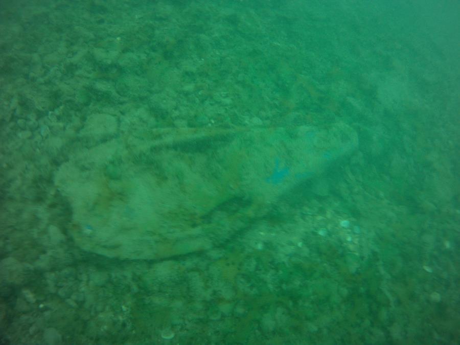 Someone lose a fin?