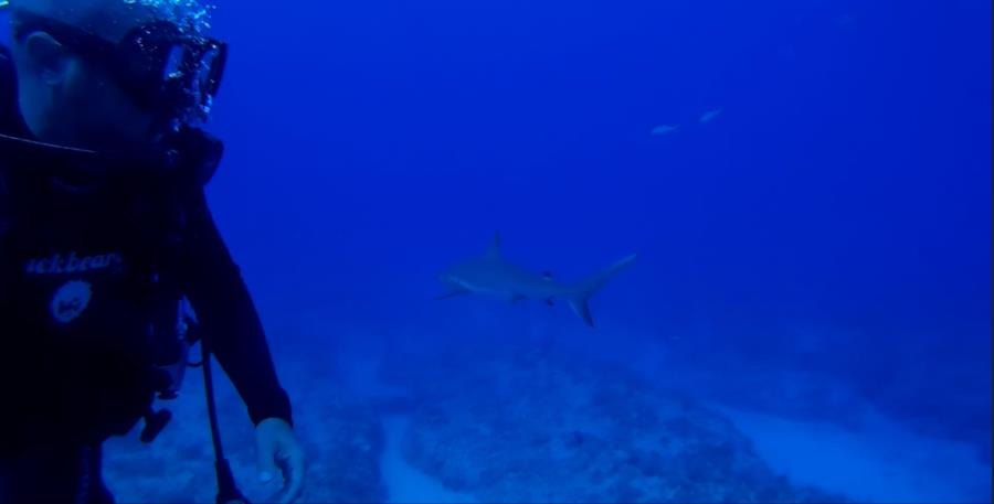 Shark Passing