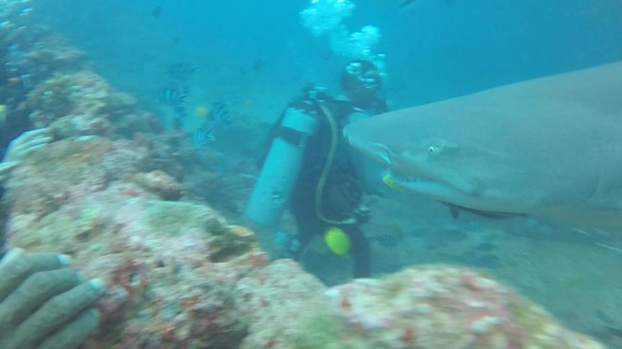 Fiji Shark Dive 2