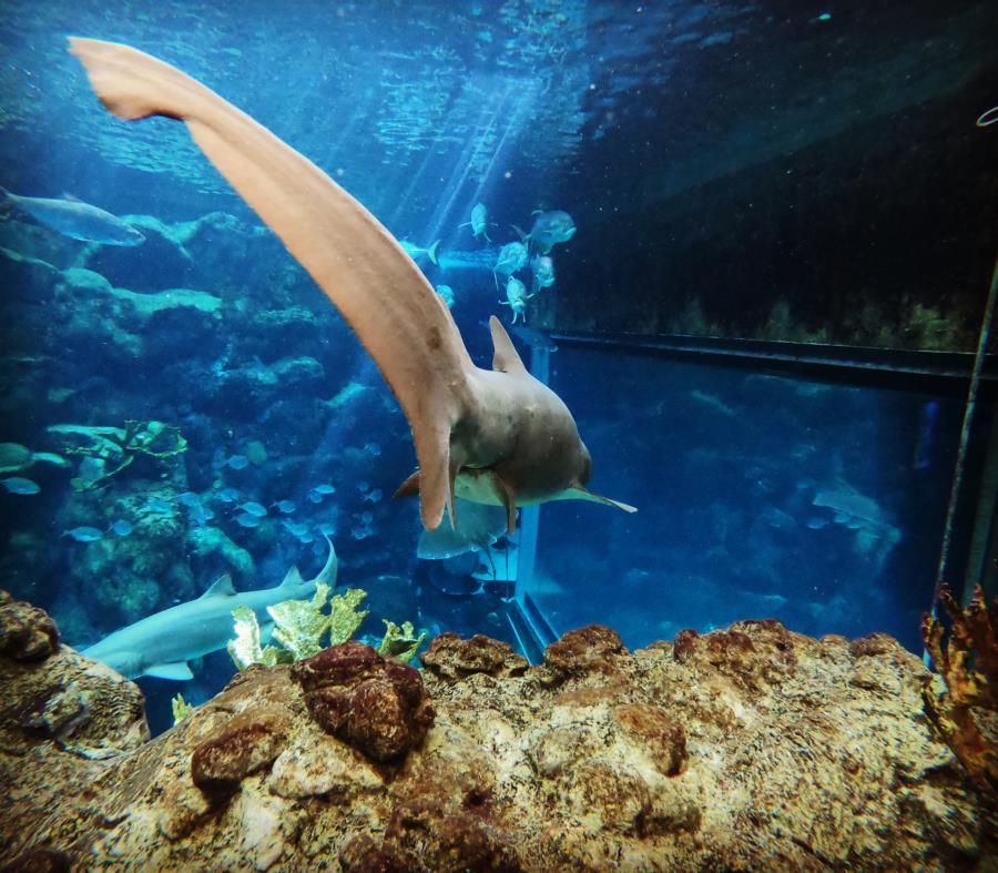 Florida aquarium shark tank dive