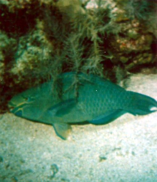 Key Largo reef