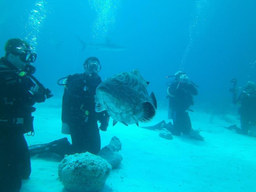 Bahamas Stuart Cove