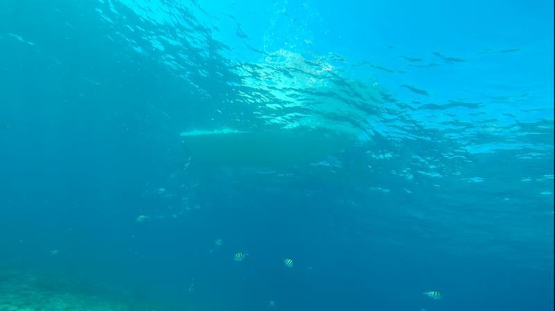 Key Largo Molasses Reef