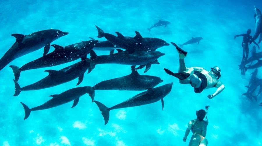 Free Dolphins Bimini