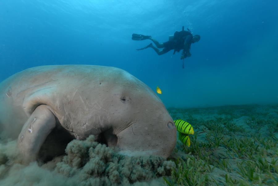 Blue Ocean Diver