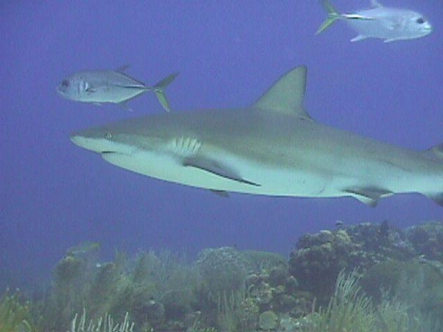 SharkFace's Profile Photo