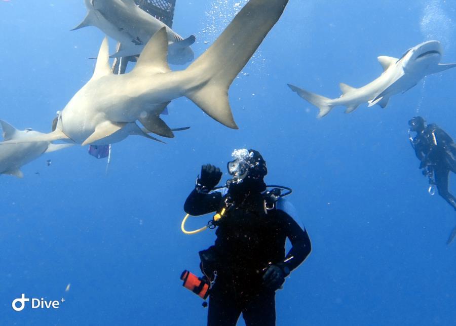 Some Sharkies