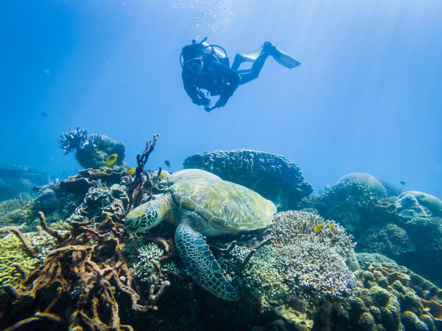 Diving with Green Turtles in Komodo