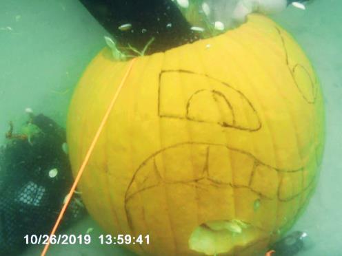 Pumpkin carving w/Dive Pros Pensacola Beach