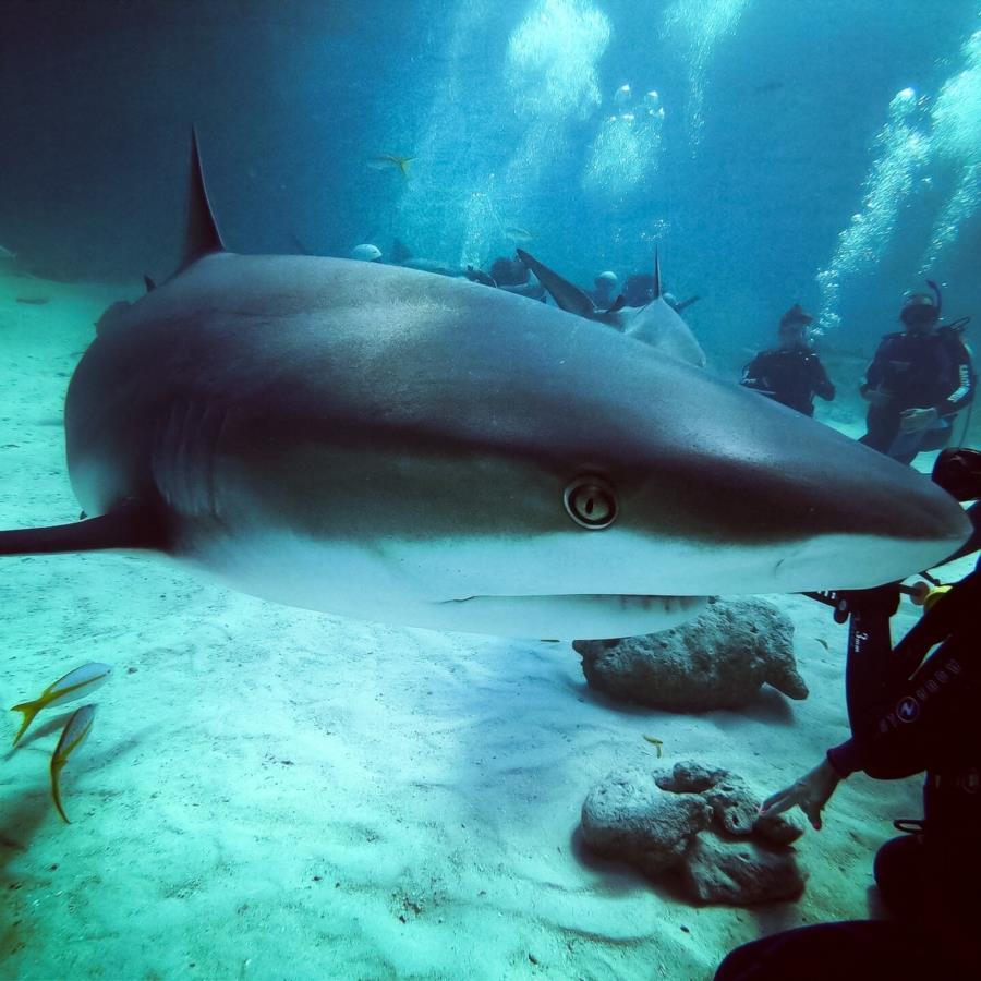 My first shark dive
