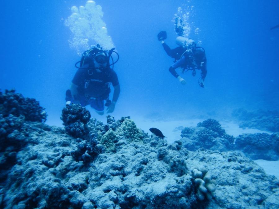 OceanRanger's Profile Photo