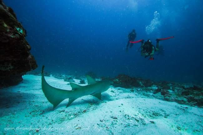 Divers and Shark