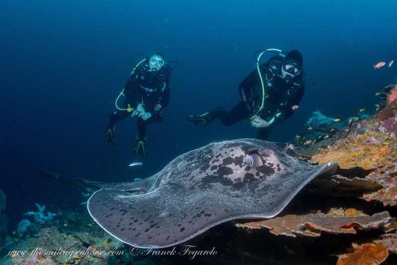 Meet creatures of the deep...